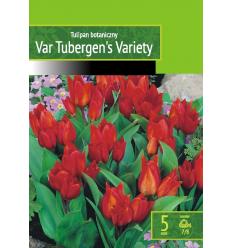 TULPES VAN TUBERGEN'S VARIETY