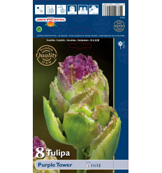 TULPES PURPLE TOWER