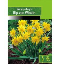NARCISES RIP VAN WINKLE