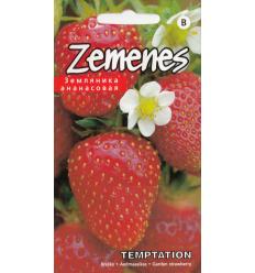 ZEMENES TEMPTATION