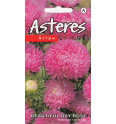 ASTERES BEAUTIFUL DAY ROSE