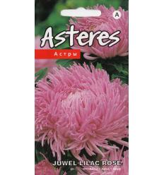 ASTERES JUWEL LILAC ROSE