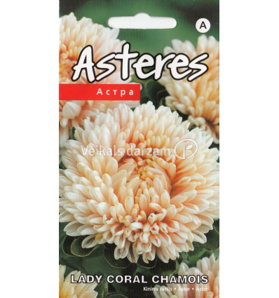 Asteres Lady Coral Chamois