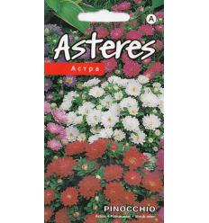 ASTERES PINOCCHIO