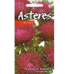 ASTERES SYRINGA PURPLE