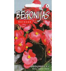 BEGONIJAS BOUMOV F1