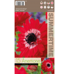 ANEMONES THE GOVERNOR
