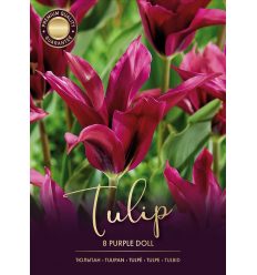 TULPES PURPLE DOLL