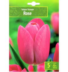 TULPES ROSE