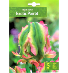 TULPES EXOTIC PARROT