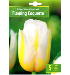TULPES FLAMING COQUETTE