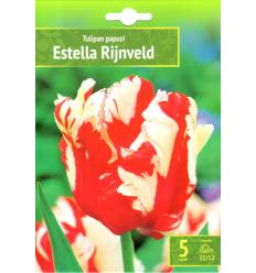 TULPES ESTELLA RIJVELD