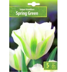 TULPES SPRING GREEN