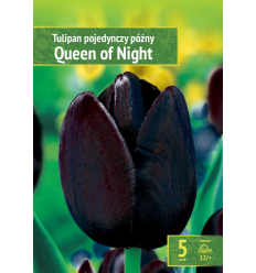 TULPES QUEEN OF NIGHT