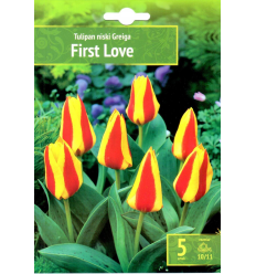 TULPES FIRST LOVE