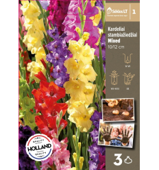 GLADIOLAS MIXED 72066