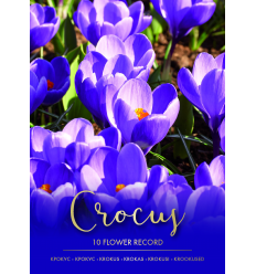 KROKUSI FLOWER RECORD 73227