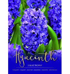 HIACINTES BLUE TROPHY 73263