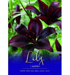 LILIJAS MAPIRA PURPLE 73405