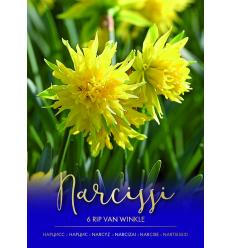 NARCISES RIP VAN WINKLE 73471
