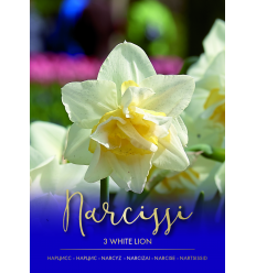 NARCISES WHITE LION 73481
