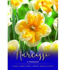 NARCISES ORANGERY 73478