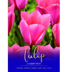TULPES ALBERT HEIJN 73333