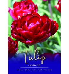 TULPES ANTRACIET 73297