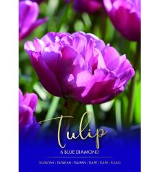 TULPES BLUE DIAMOND 73290