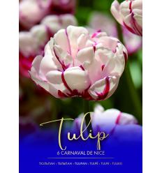 TULPES CARNAVAL DE NICE 73438