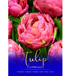 TULPES COPPER IMAGE 73441