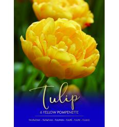 TULPES YELLOW POMPONETTE 73296