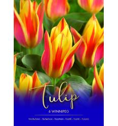 TULPES WINNIPEG 73462
