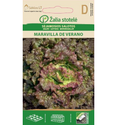 DĀRZA SALĀTI MARAVILLA DE VERANO