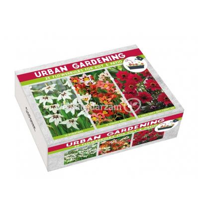 K - URBAN GARDEN RED RAUDONA 01893